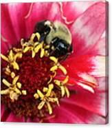 Sleeping Bumble Bee Canvas Print