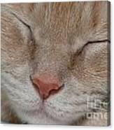 Sleeping Cat Face Closeup Canvas Print