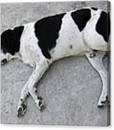 Sleeping Dog Lying On The Ground Canvas Print