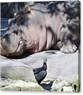 Sleeping Hippo Canvas Print