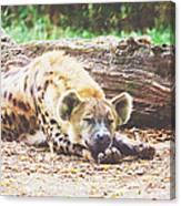 Sleeping Hyena Canvas Print