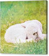 Sleeping Lamb Green Hue Canvas Print