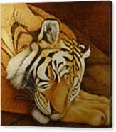 Sleeping Tiger Canvas Print