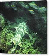 Sleeping Wobbegong And School Of Fish Canvas Print