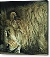 Sleepy Beast Canvas Print