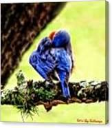 Sleepy Bluebird Canvas Print