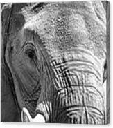 Sleepy Elephant Lady Black And White Canvas Print