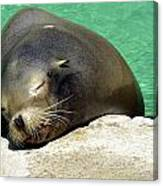Sleepy Seal Canvas Print