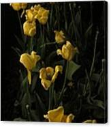 Sleepy Yellow Tulips Of The Silent Nocturne Canvas Print