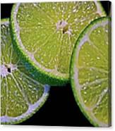 Sliced Limes Canvas Print