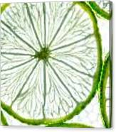 Slices Lime. Canvas Print