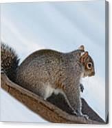 Sliding Squirrel Canvas Print