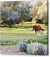 Slow And Easy Canvas Print
