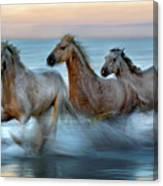 Slow Motion Horses Canvas Print