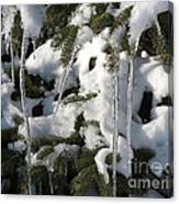 Slow Snow Melt Canvas Print