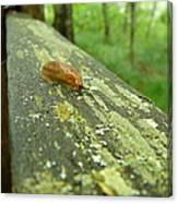 Slug Life Canvas Print
