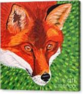 Sly Mr. Fox Canvas Print