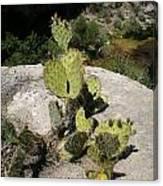 Small Cactus Canvas Print