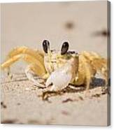 Small Crab On The Beach Canvas Print