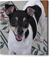 Small Dog Big Smile Canvas Print