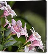 Small Flowers Canvas Print