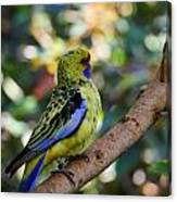 Small Parrot Canvas Print
