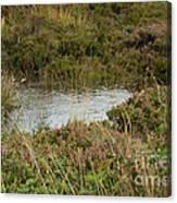 Small Pond Canvas Print