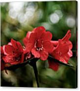 Small Red Flowers Canvas Print