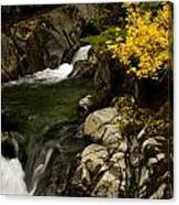 Small Stream During Fall Canvas Print