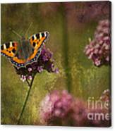 Small Tortoiseshell Butterfly Canvas Print