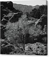Small Tree Canvas Print