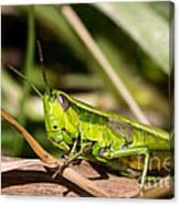 Smaragd-green Grasshopper Canvas Print