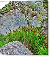 Smartweed Just Below Huayna Picchu's Peak-peru  Canvas Print