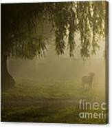 Smelly Goat In The Mist Canvas Print