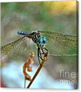 Smiling Dragon Fly Canvas Print