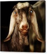 Smiling Egyptian Goat II Canvas Print