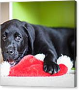 Smiling Lab Puppy Canvas Print
