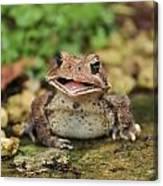 Happy Toad Canvas Print