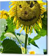 Smiling Sunflower Canvas Print