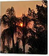 Smoke Covered Sky Sunset Thru The Palm Trees Canvas Print
