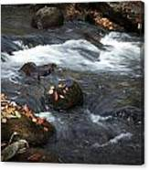 Smokey Mountain Stream In Autumn No.2 Canvas Print
