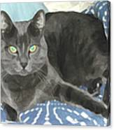Smokey On A Blue Blanket Canvas Print