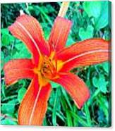 Smokie Mountian Wild Flower Canvas Print