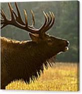 Smoky Mountain Bugle Canvas Print