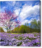 Smoky Mountain Spring Canvas Print