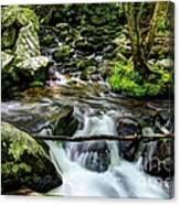 Smoky Mountain Stream 4 Canvas Print