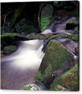 Smoky Mountain Stream Canvas Print