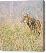 Smoky Mountains Coyote Canvas Print