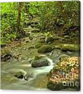Smoky Mountains Fighting Creek Canvas Print
