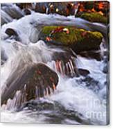 Smoky Mtn Stream - 429 Canvas Print